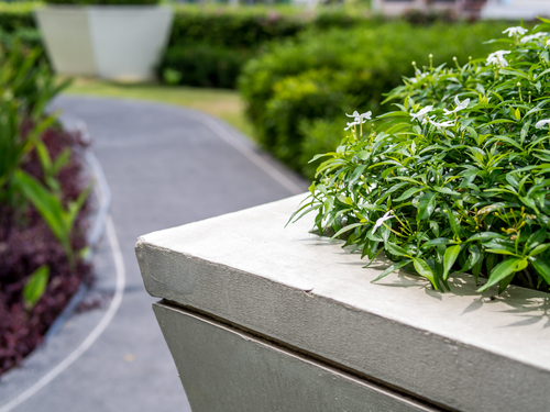 Guide to Growing a Rooftop Garden