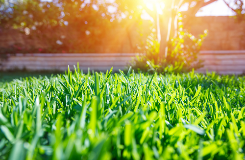 Why Hire Us For Lawn And Grounds Maintenance